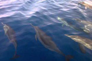 صور صور على البحر الاحمر , اروع واجمل الصور الرقيقة على البحر الاحمر