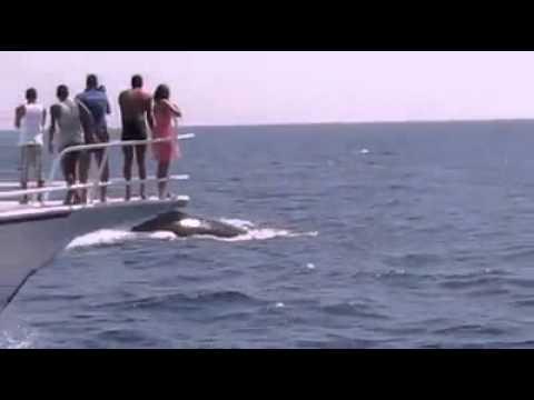 بالصور صور على البحر الاحمر , اروع واجمل الصور الرقيقة على البحر الاحمر 15110 2