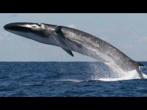 بالصور صور على البحر الاحمر , اروع واجمل الصور الرقيقة على البحر الاحمر 15110 3