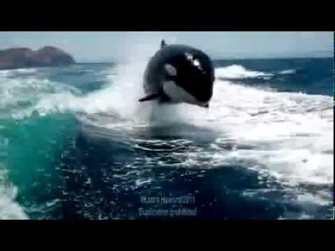 بالصور صور على البحر الاحمر , اروع واجمل الصور الرقيقة على البحر الاحمر 15110 6