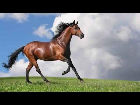 بالصور انواع الخيول بالصور , اروع واجمل الخيول الجميلة 15121 1