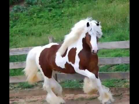 بالصور انواع الخيول بالصور , اروع واجمل الخيول الجميلة 15121 11