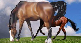 صور انواع الخيول بالصور , اروع واجمل الخيول الجميلة