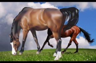 صورة انواع الخيول بالصور , اروع واجمل الخيول الجميلة