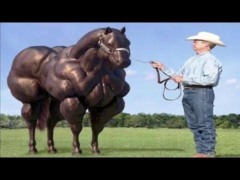 بالصور انواع الخيول بالصور , اروع واجمل الخيول الجميلة 15121 2