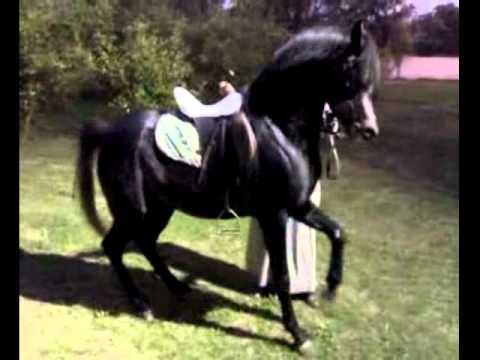 بالصور انواع الخيول بالصور , اروع واجمل الخيول الجميلة 15121 9