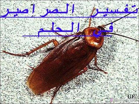 صور تفسير الاحلام رؤية الصراصير , تفسير الاحلام وما يحلم به الانسان