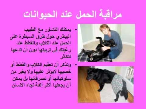 بالصور بحث حول داء الكلب , داء الكلب والوقاية والعلاج منه 16119