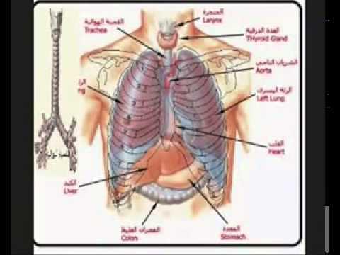 صورة الم في الجانب الايمن من القفص الصدري , الاام الصدر والوقاية منها