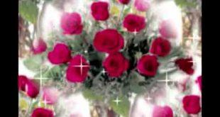 الصور الورود الجميلة , اروع واجمل الصور الورد الرقيقة الجميلة