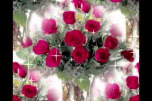 صور الصور الورود الجميلة , اروع واجمل الصور الورد الرقيقة الجميلة
