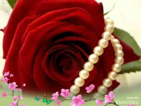 صورة الصور الورود الجميلة , اروع واجمل الصور الورد الرقيقة الجميلة 16159 2