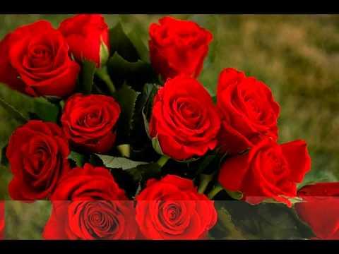 صورة الصور الورود الجميلة , اروع واجمل الصور الورد الرقيقة الجميلة 16159 4