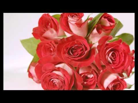 صورة الصور الورود الجميلة , اروع واجمل الصور الورد الرقيقة الجميلة 16159 7