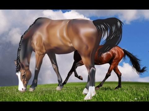 بالصور خيول عربية اصيلة , اناقة الخيول العربيه 2220 8